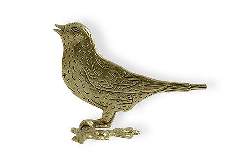 Πουλί σε κλαδί /  Bird on a branch