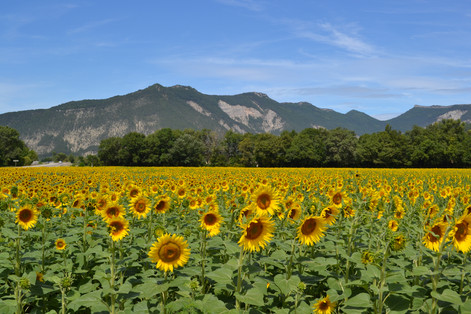 Sunny France