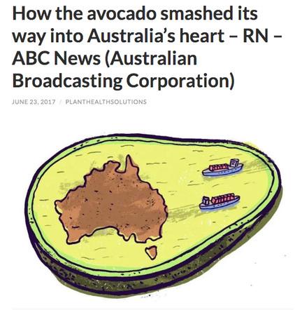 Avo - ABC NEWS