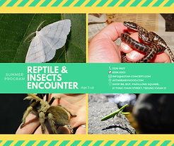 Reptiles & Insects Encounter poster.png