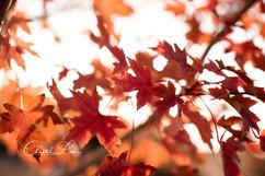 Leaves_logo.jpg
