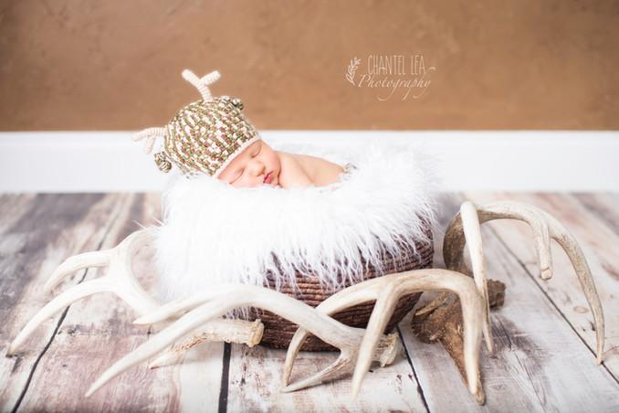 Korsen Newborn