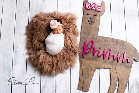 Primm Newborn