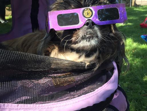 Asia Totality Chillin, Solar Eclipse Celebration 2017