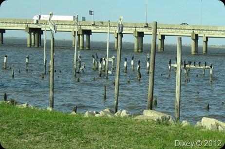 3-4 Dead Water Fowl Per Week