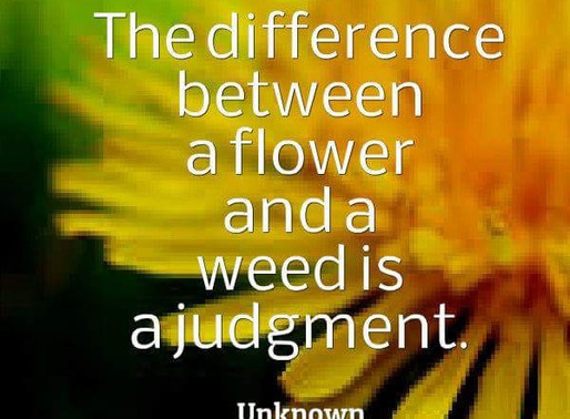 Difference between a Flower and a Weed