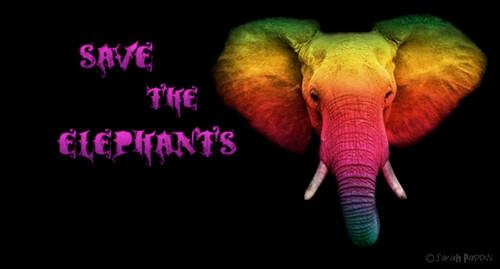 Save the elephants rainbow style 500