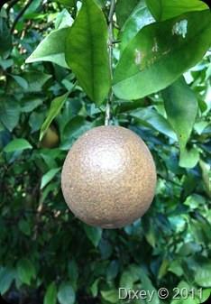 Mysterious Brown/Black Oranges