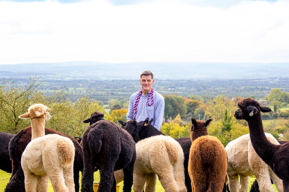 Alpaca farming, Ireland