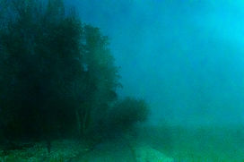 5793-1 arbre vert.jpg