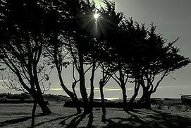 6078 arbres soleil.jpg