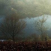 5845-1_arbre_méandre.jpg