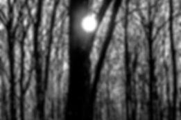 arbre et point blanc.jpg