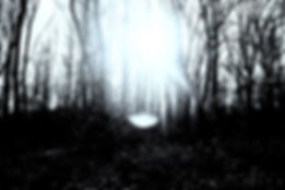 forêt_et_point_blanc.JPG