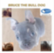 BruceTheBulldog.jpg