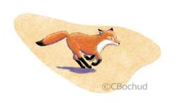 Renard en fuite, running fox