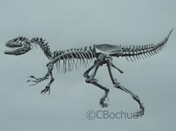 Velociraptor, dinosaure, dinosaure