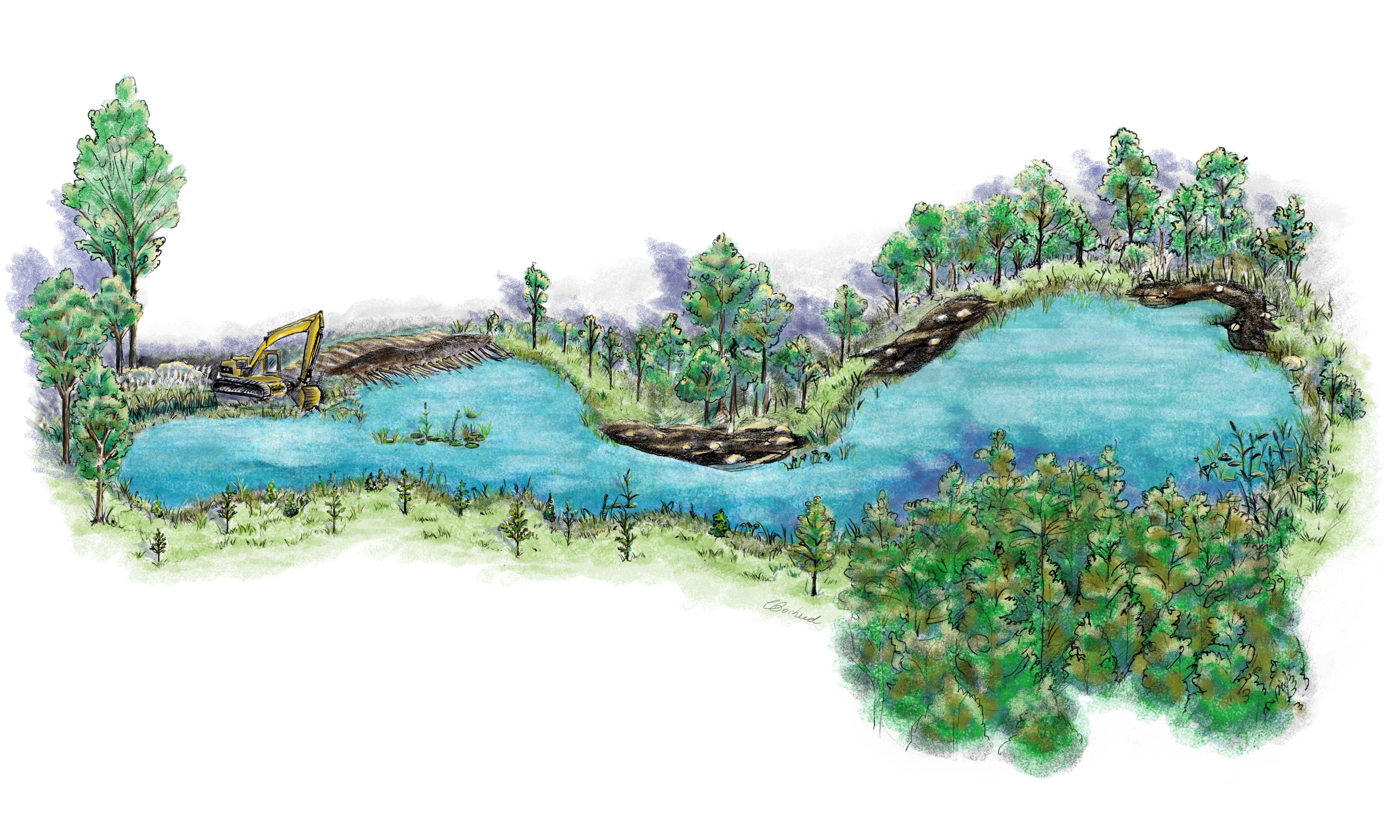 Étape de renaturalisation d'un étang