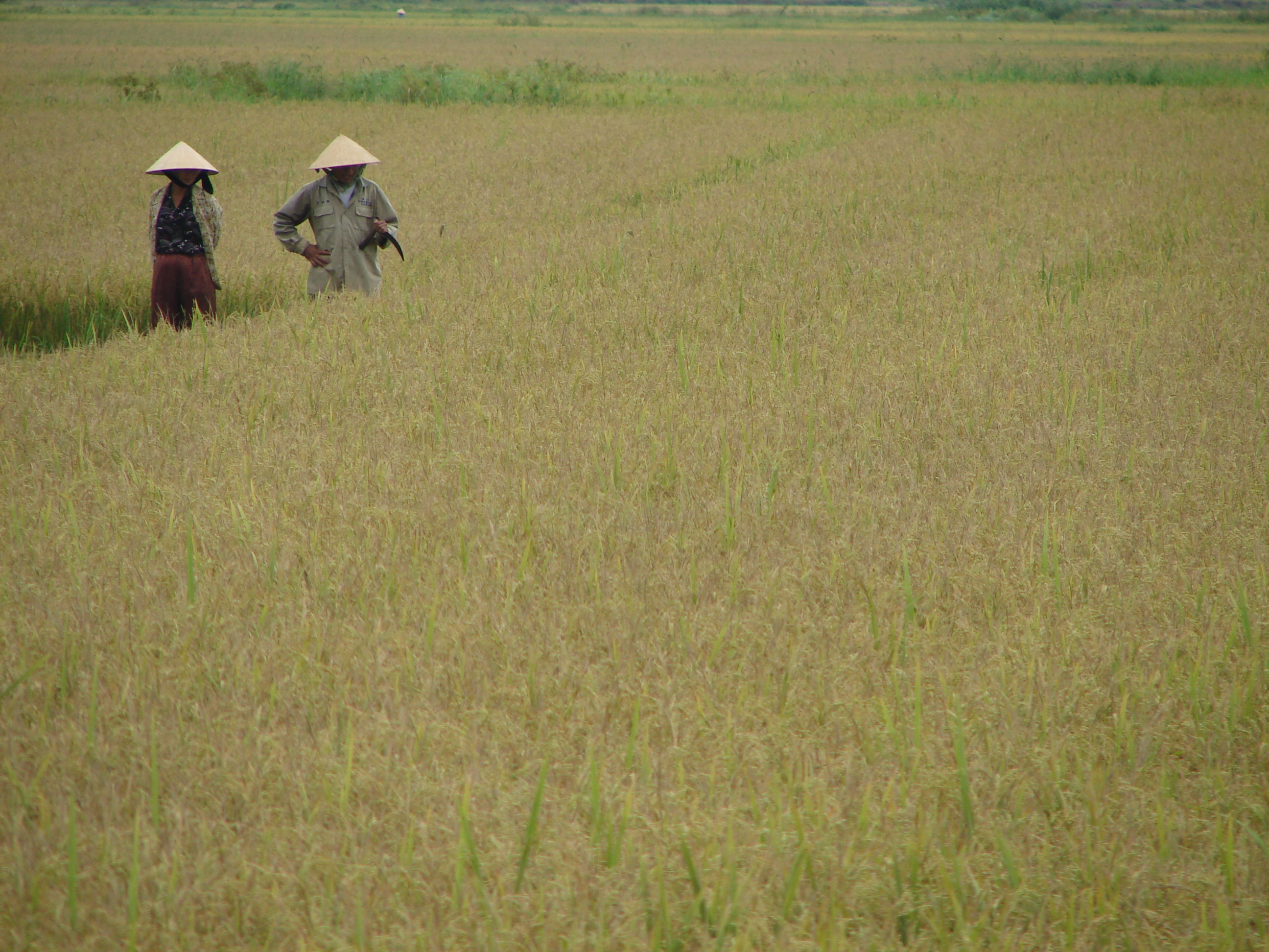 Vietnam Riz