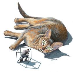 Chat, cat, félin, feline