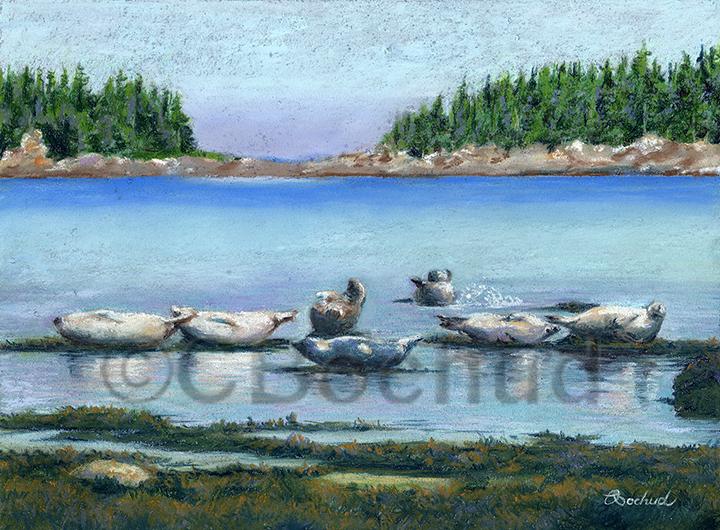 Phoques seals au parc du Bic, QC