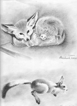 Tennerec et lièvre sauteur