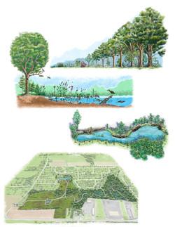 Illustration parc nature