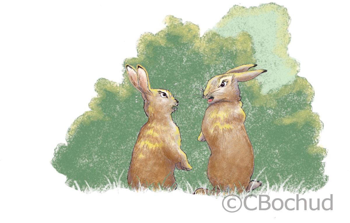 Deux lapins en chicane