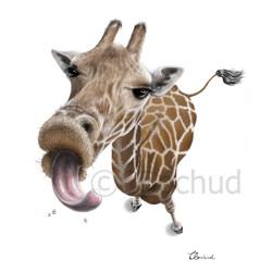 Girafe, Hug, Giraffe, Bisou