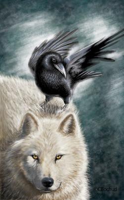 Loup corbeau Raven Wolf