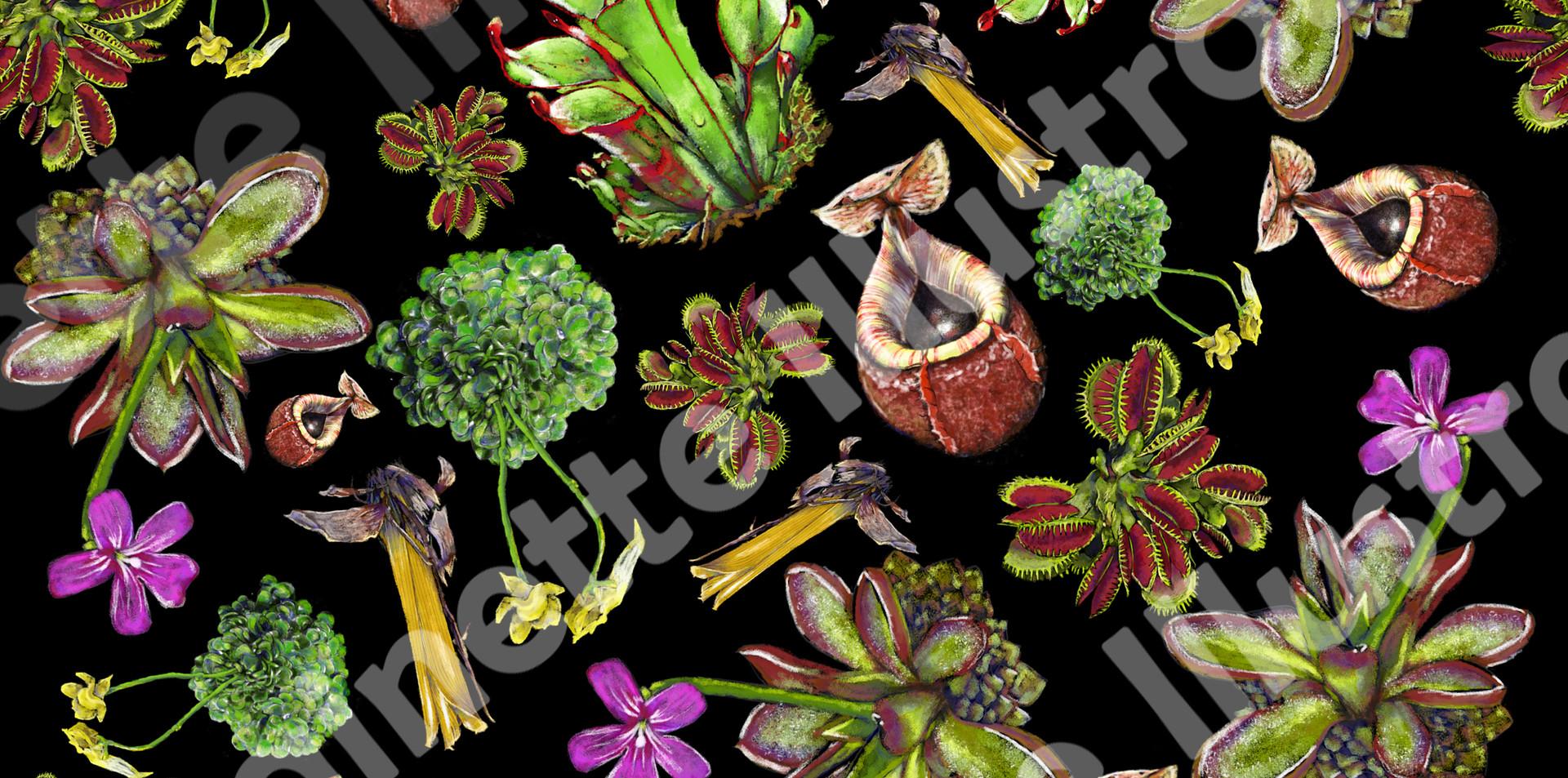 carnivorousplantsnoir.jpg