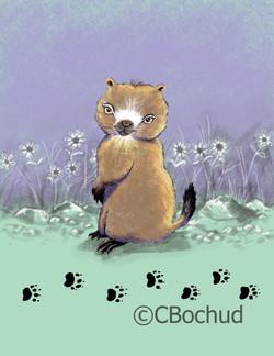 Marmotte Groundhog