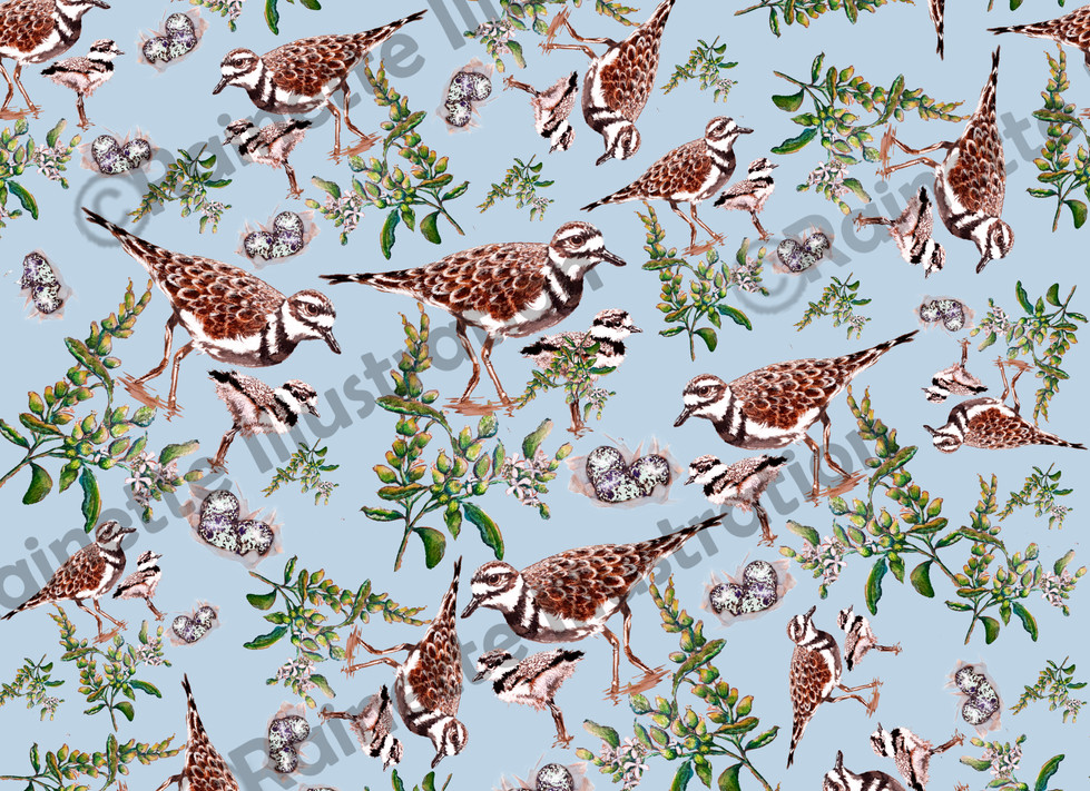 Pattern fond bleu Pluvier Kildir.jpg