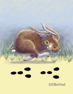 Lièvre Hare