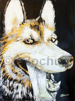 """""""Luna"""" Husky dog"""