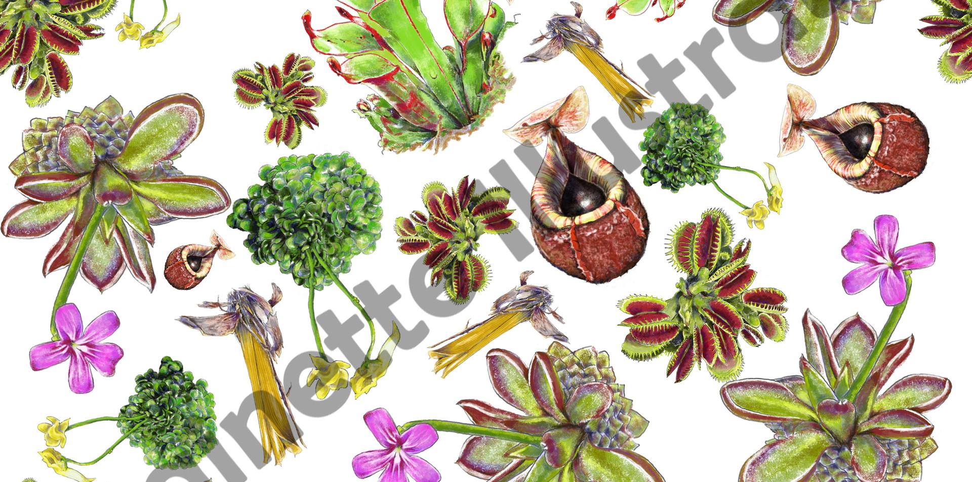 carnivorousplants.jpg