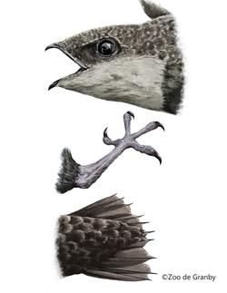 groupe de trois parties du Martinet ramoneur
