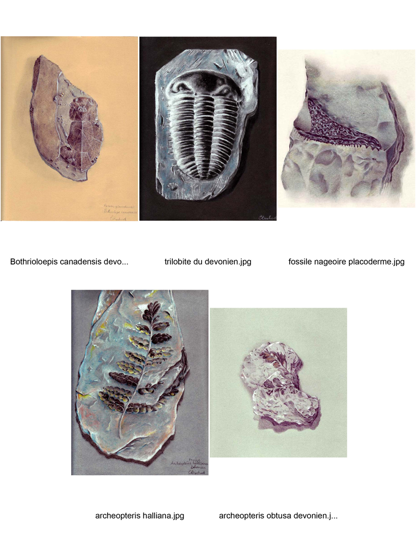 Fossil Fossile Devonian Ordovician