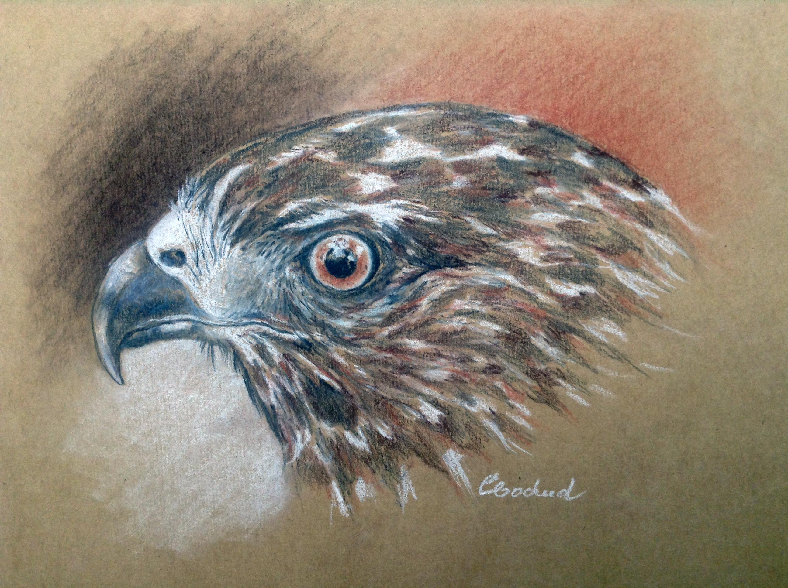 Aigle royal, Golden eagle