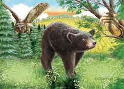 bear, ours chouette, owl, bee