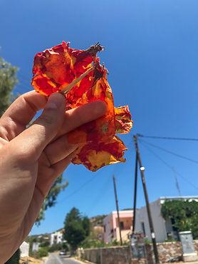 tomatos 3.jpg