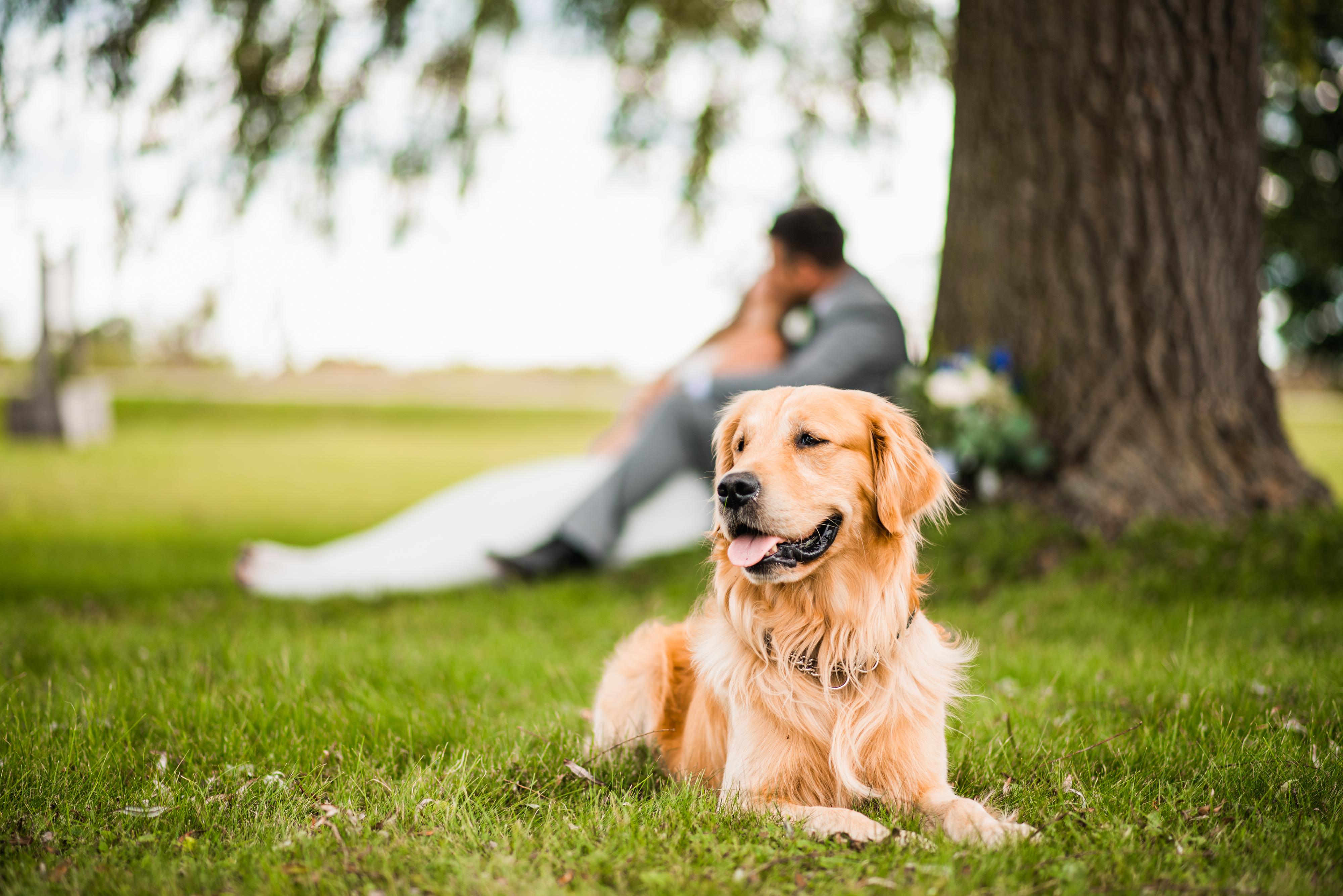 Becky & John-Boy Wedding - Wedding Photo