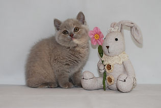 Tapestry Cats pictures