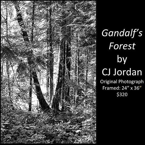 "MONARCH: ""Gandalf's Forest"" framed original photograph by CJ Jordan"