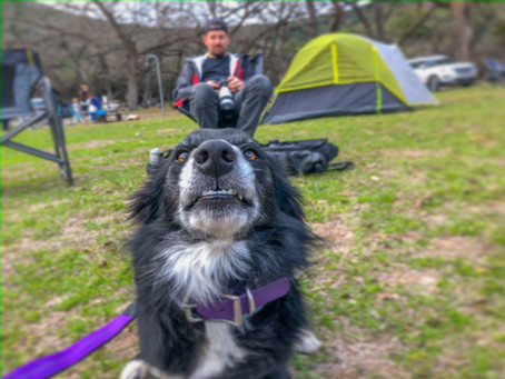 Helpful Habits for Hiking with Your Dog