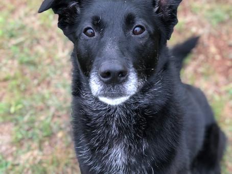 Adoptable Dog Spotlight: Elvis