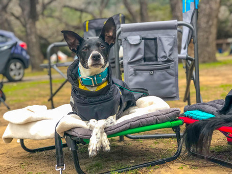 Useful Skills for Camping & Hiking With Your Dog