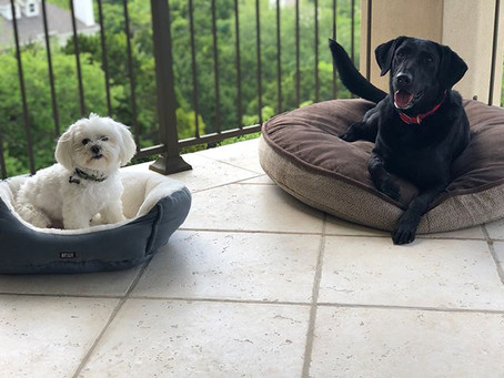 Multi-Dog Household Series: Managing a Multi-Dog Household