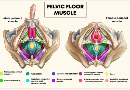 Why you should be exercising in a way that strengthens the Pelvic Floor...