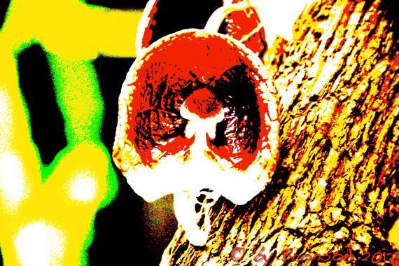Mushroom Blossom